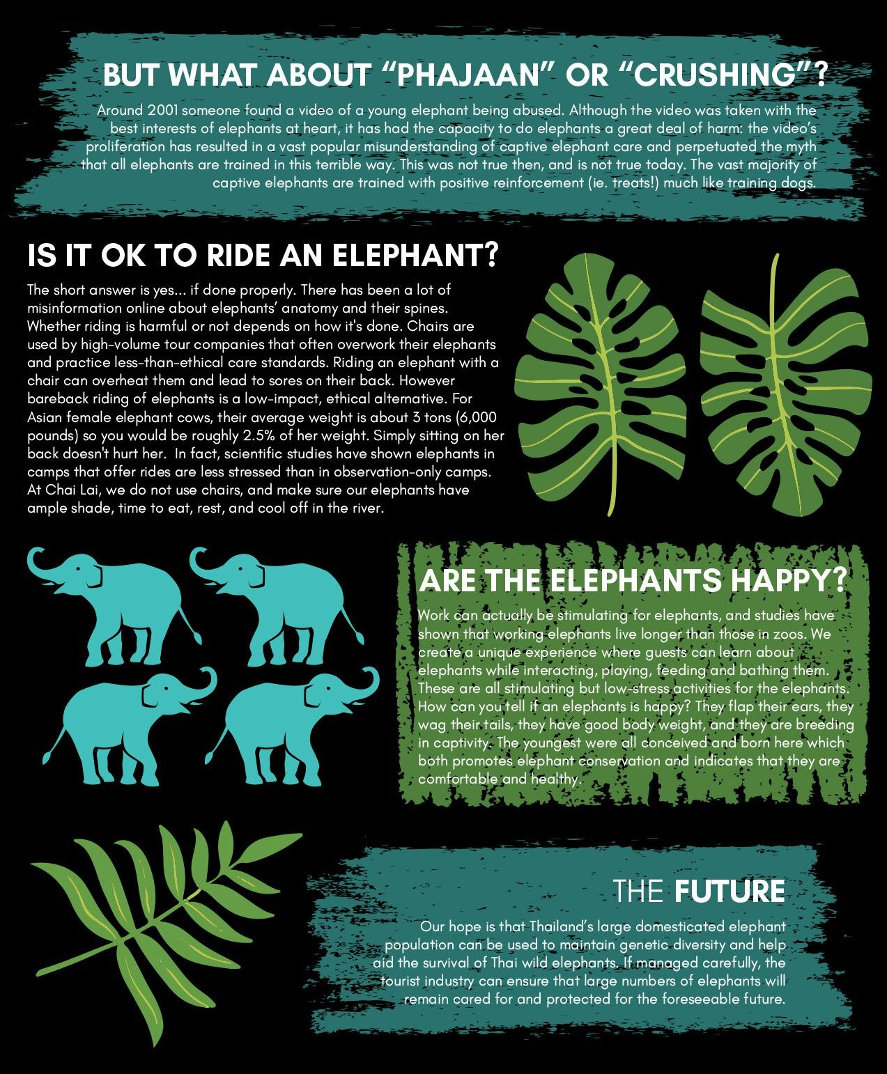 Elephant Ethics Graphic