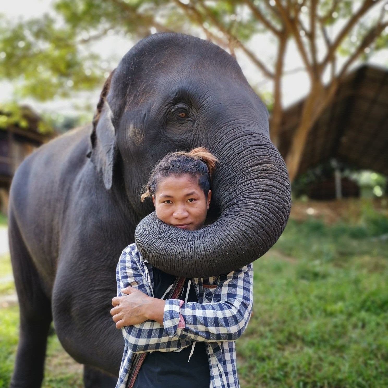 A mahout bonding with an elephant