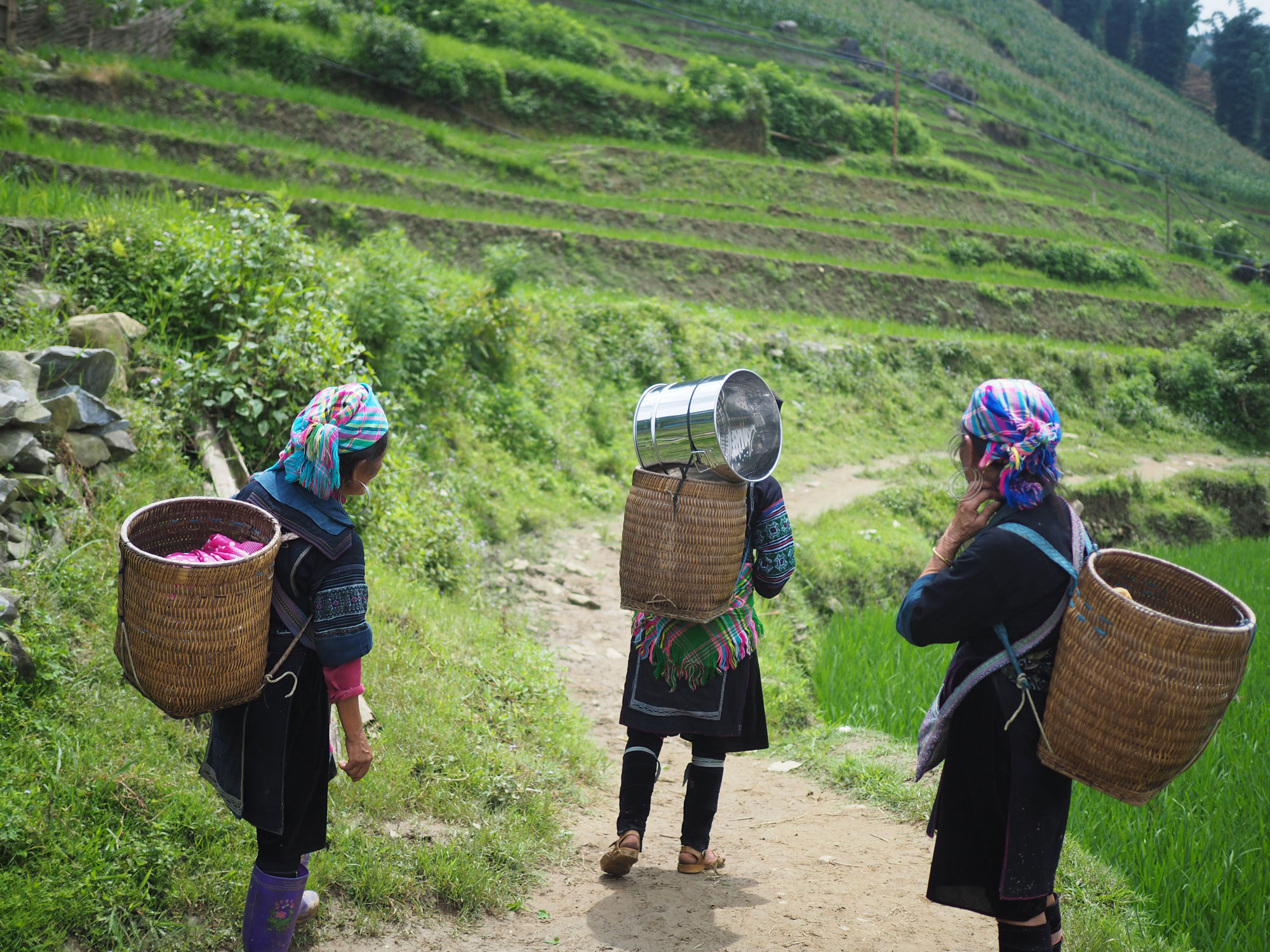 Three migrant women working in a rice field