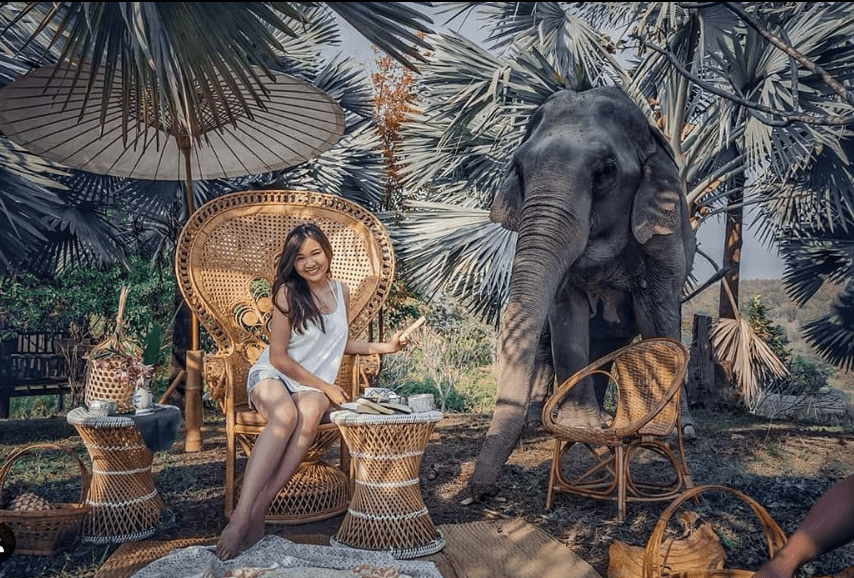 picnic with Elephant