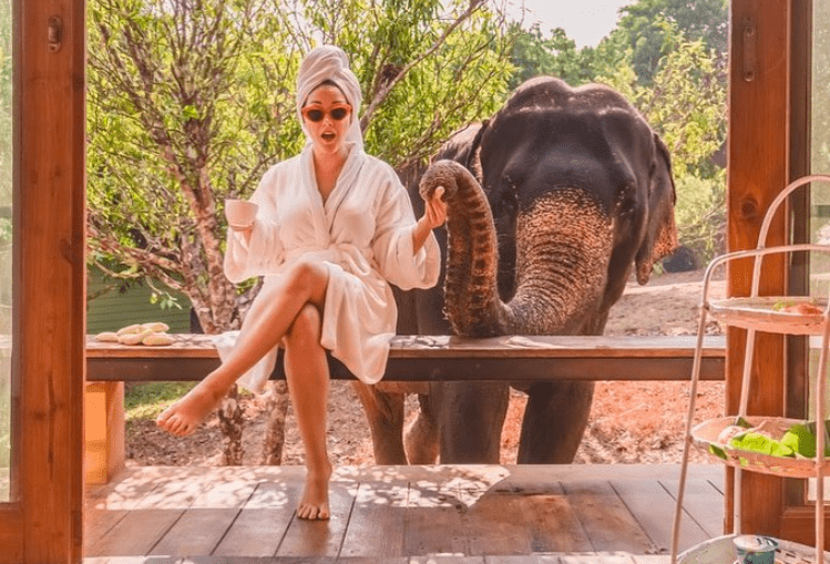 wake up and have coffee with elephants