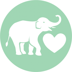 how we rescue asian elephants in thailand heart