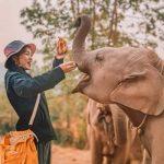 elephant nature hotel
