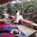 Chai Lai Orchid elephant resort bungalow
