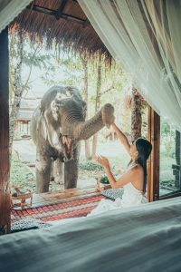 elephant bungalow