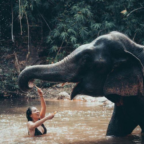 ว่ายน้ำกับน้องช้าง