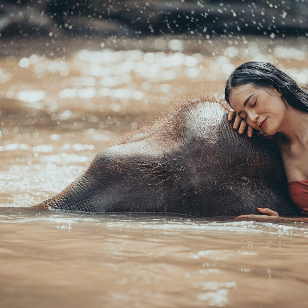 swim with elephants