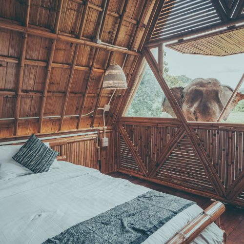 an elephant out side of the bedroom