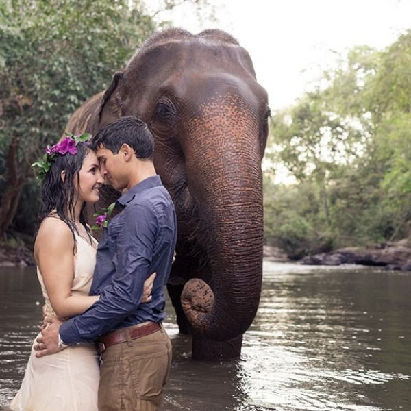 ELEPHANTWEDDING1