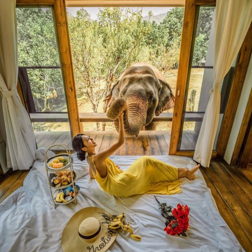 travel blogger eating breakfast with an elephant