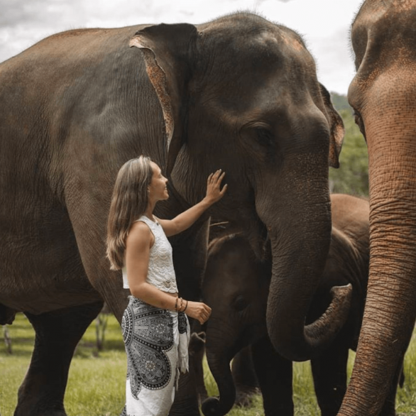 ethical elephant park