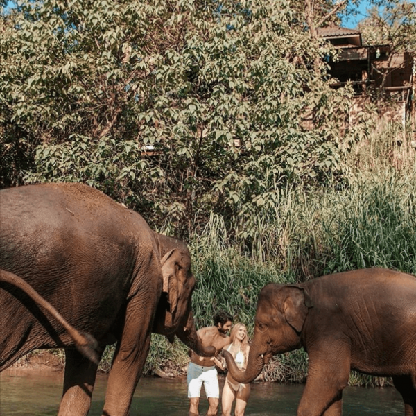 guests meeting elephants