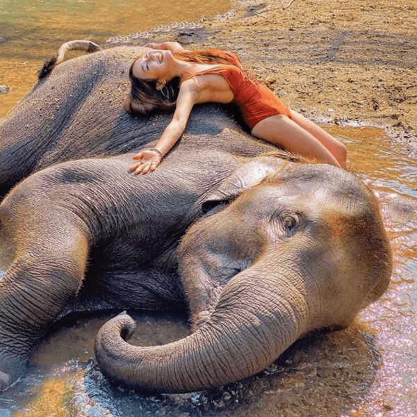 swim with baby elephants