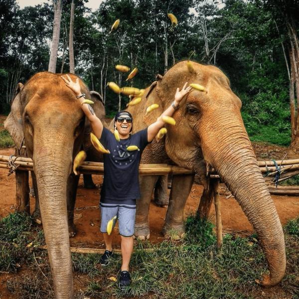 elephants eat bananas