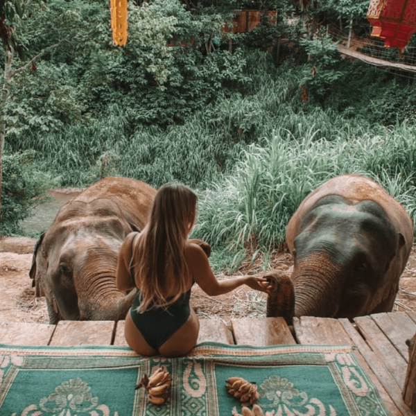 a tourist feeds elephants bananas