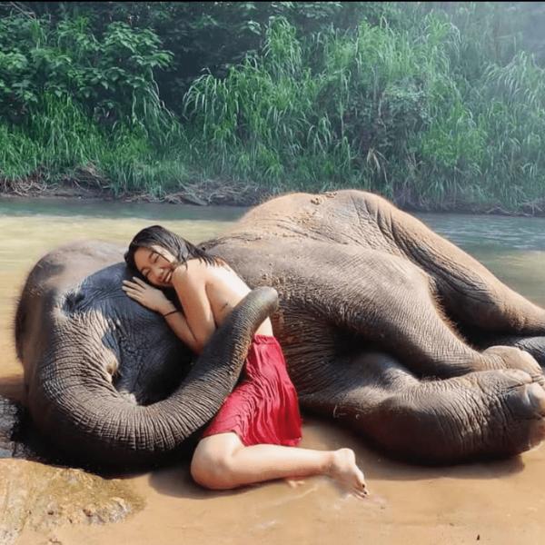 hug an elephant