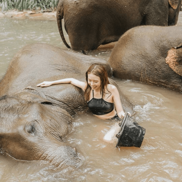a guest swims with elephants