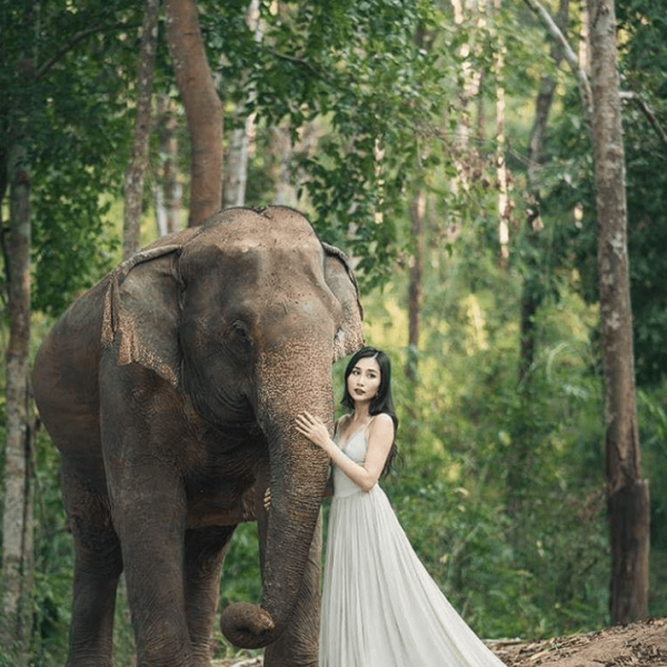 a travel blogger cares for a rescued elephant