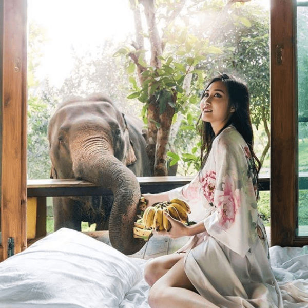 a guest feeds elephants from her bed