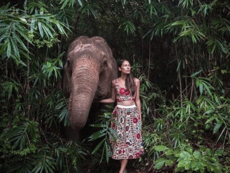 a guest walking with elephants
