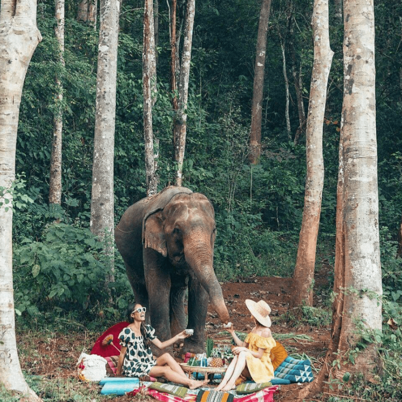 elephant picnic in mae wang