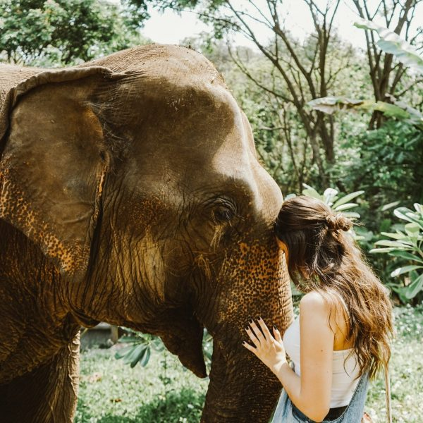 A woman caressing an elephant