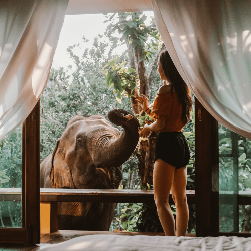 Woman feeding an elephant from a bungalow