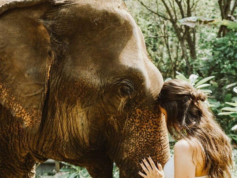 one one one elephant time